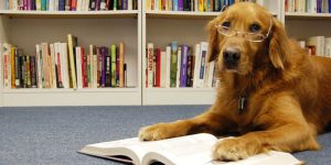 BARK! Read to Therapy Dogs @ Anderson Library